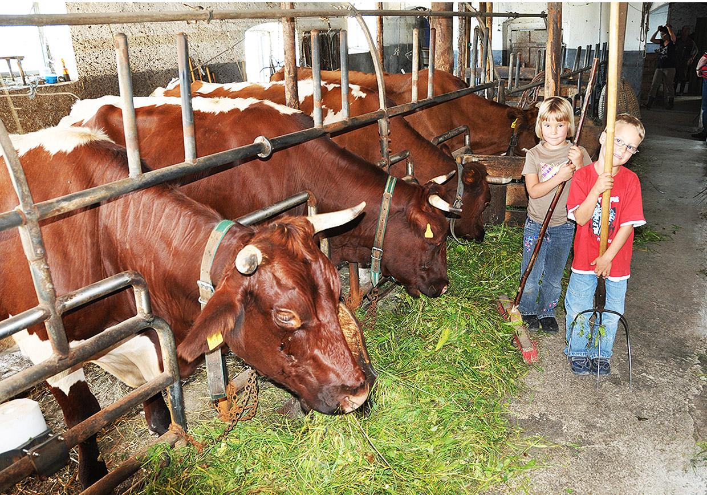 bauernhof, kühe, melken, stall, ausmisten, heu, gaudi, kinder, spielplatz, urlaub, berge, natur
