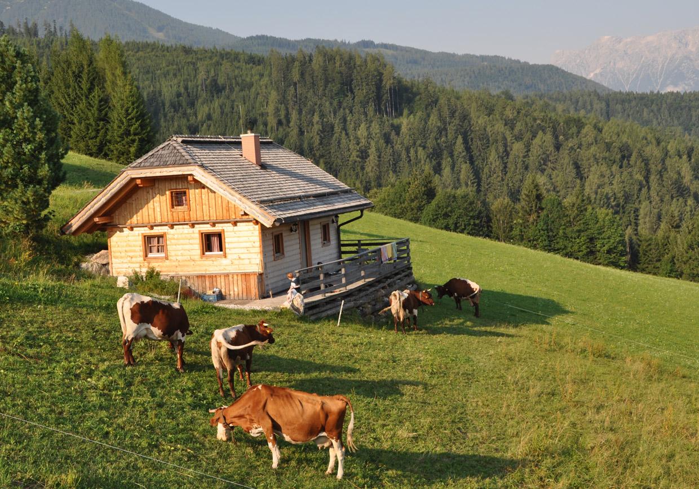bauernhof, urlaub, kinder, kühe, pferde, hunde, streichelzoo