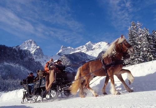 g-aktivurlaub-pferdeschlittenfahrt-pferdeschlitten-pferde