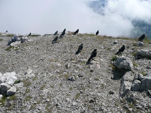 g-wandern-voegel-beobachten-urlaub-stodertal-oberoesterreich-berge